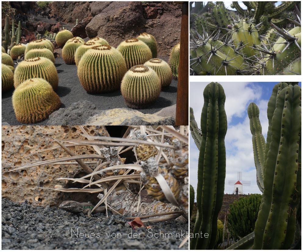 Kaktus, Jardin de Cactus, Lanzarote, Reisen, Reise, Travel, unterwegs, Kanarische Inseln, Meer, Ozean, Atlantik, Schminktante, Kanaren, Spanien, Urlaub