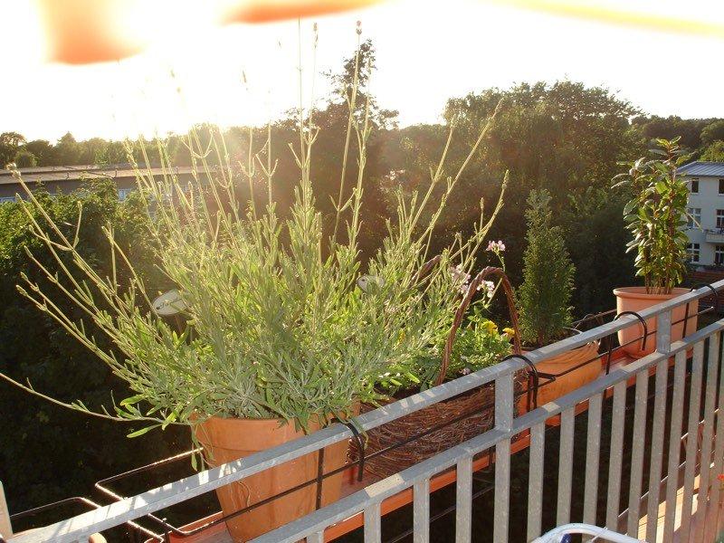 Sommer vorm Balkon.