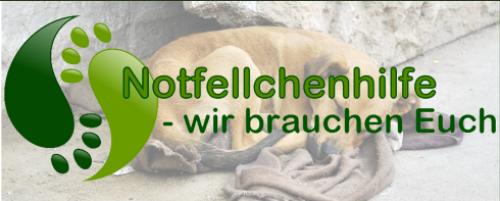Startseite der Notfellchenhilfe, die sich für die Hunderettung in Rumänien einsetzen.