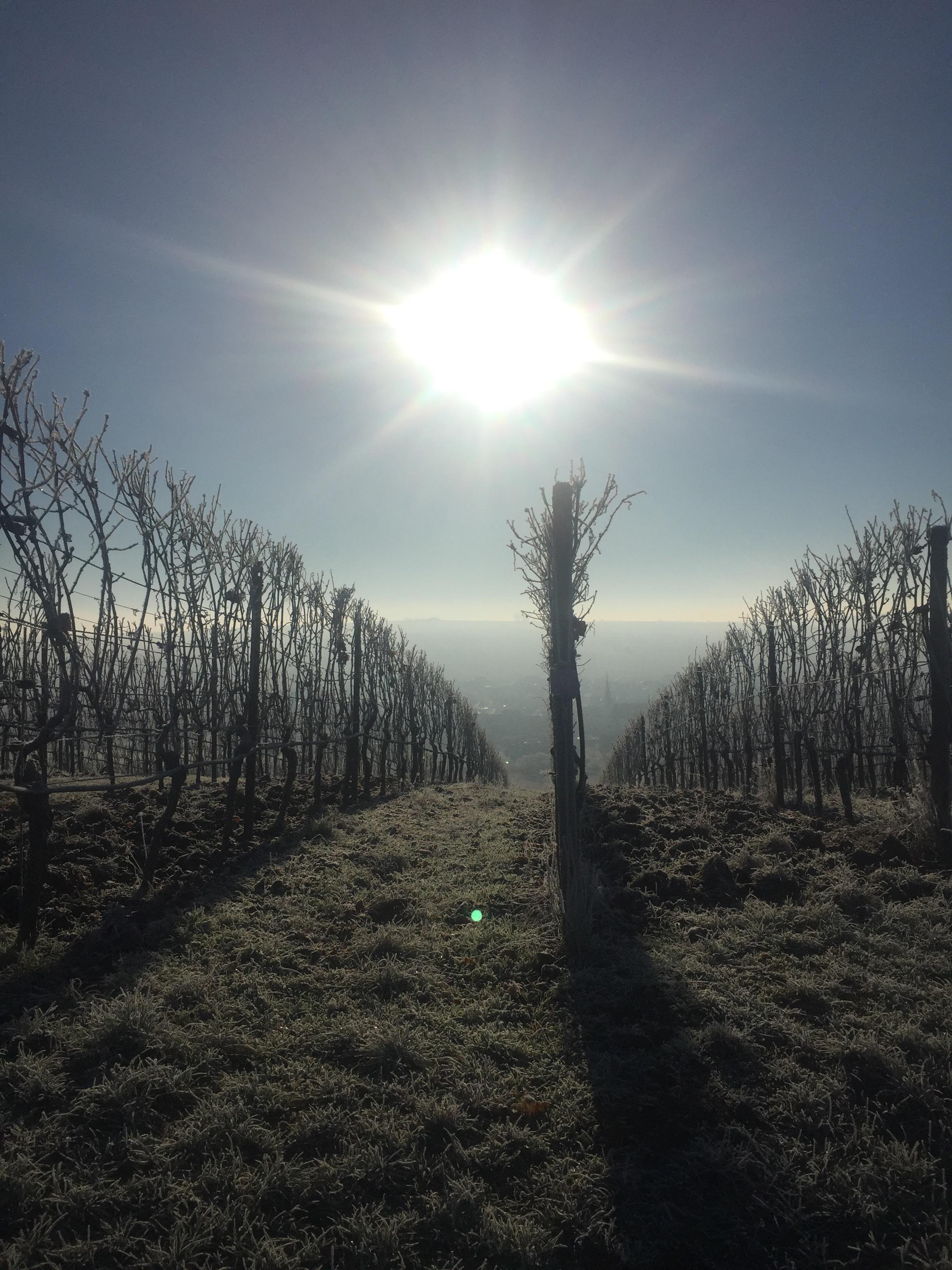 Winterlandschaft mit Sonne.