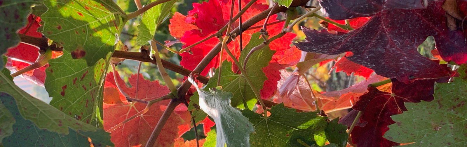 Monatsrückblick Oktober, goldener Herbst, beautyblog, Schminktante, Anja Frankenhäuser