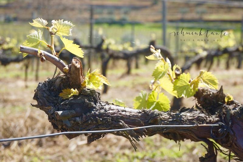 SixSenses, Wein, Weinrebe, Weinberg, Weinstock, grün, Topblog, Reisen, Reise, Portugal, Duoro Valley, Travel, Schminktante