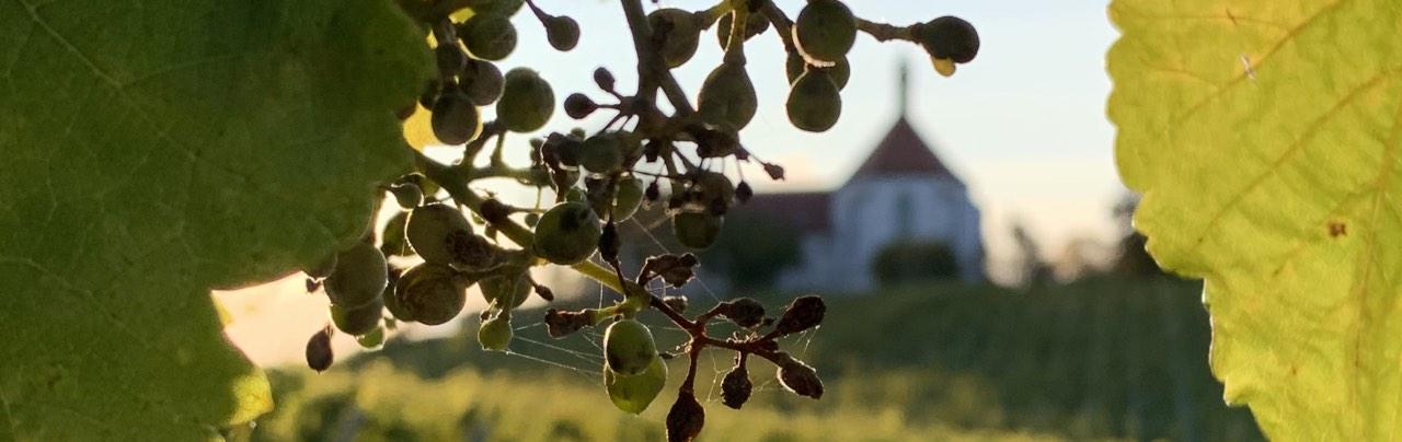 Vogrelsburg, Volkach, Herbst, Weinlaub, Monatsrückblick, Beautyfavoriten, Schminktante, Anja Frankenhäuser