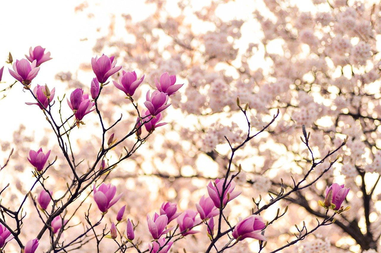 monatsrückblick, fürhling, corona, alltag, homeoffice, magnolien, inspiration, schminktante, anja frankenhäuser, beautyblog germany, top-beautyblog