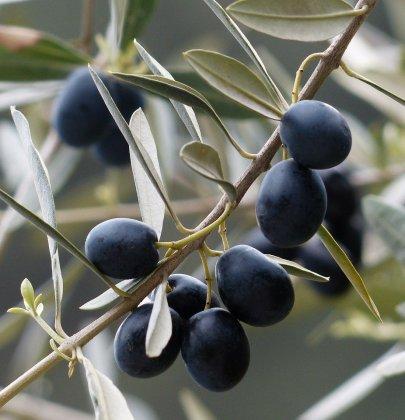 Olivedas Beautydrink: jetzt mit 50% Rabatt
