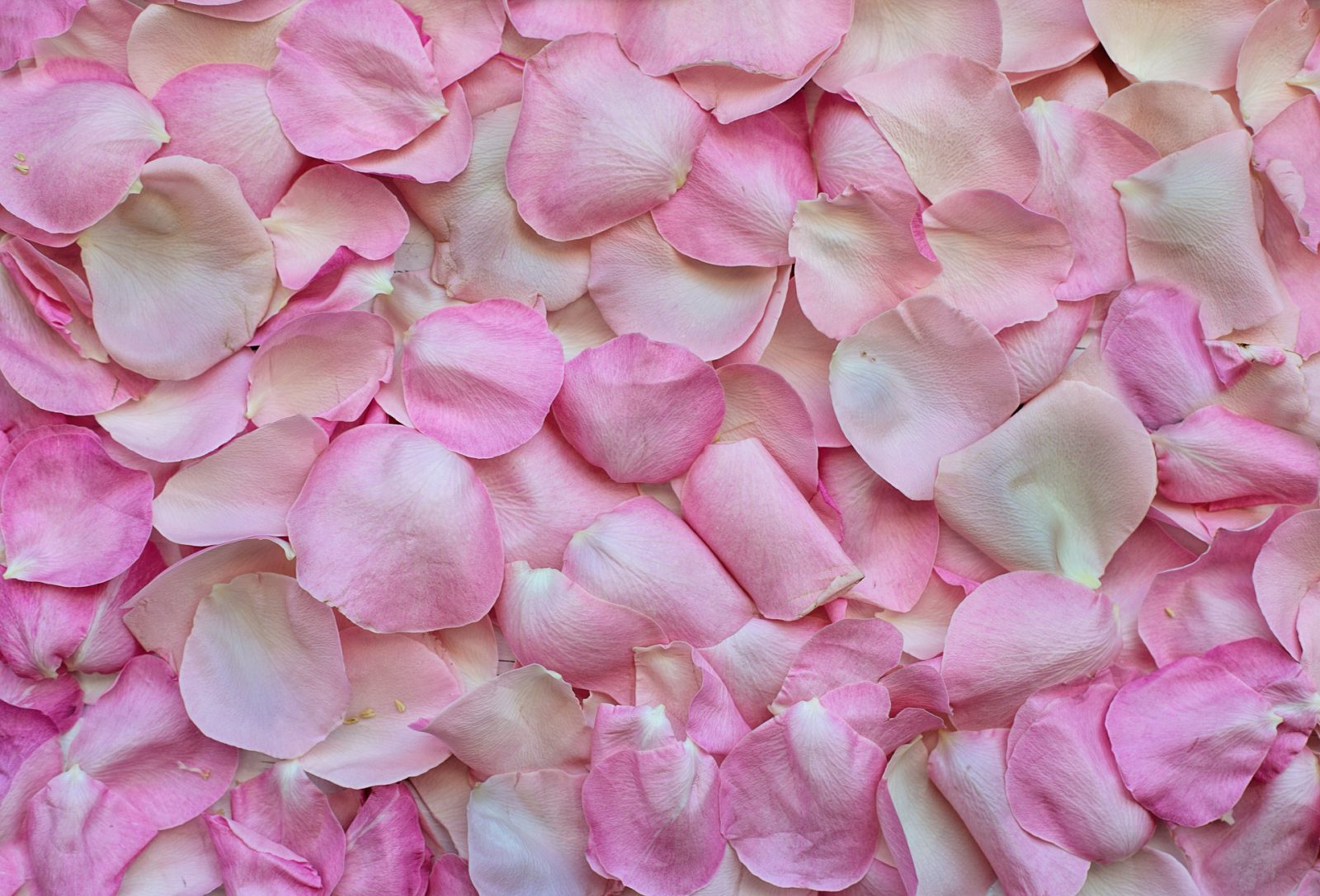 Haut, Hautpflege, Anti Aging, Beauty, Rose, Wildrosen, Wild Roses, Schminktante, Anja Frankenhäuser